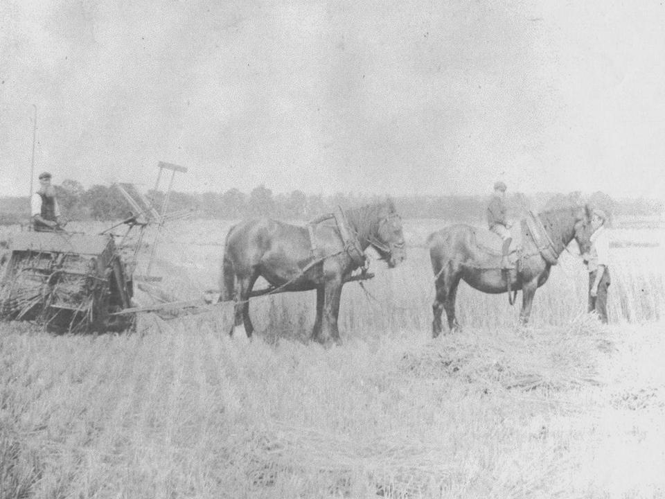 Ploughing at Boughton